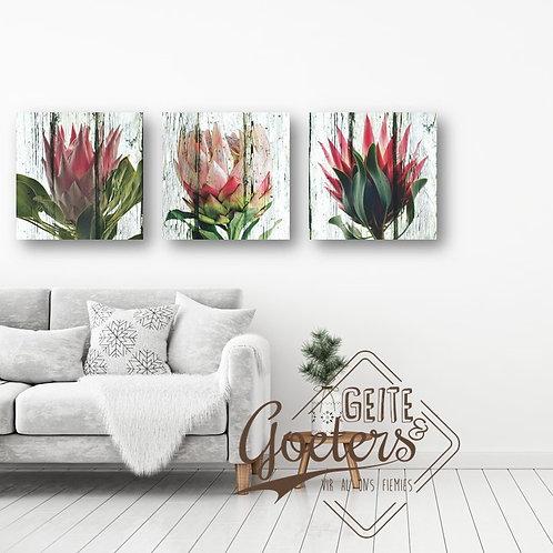 Protea Trio Colours (30cm each)