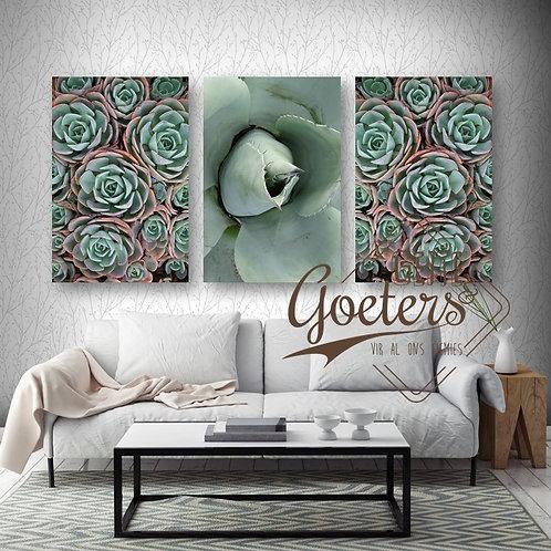 Succulent Set of 3: Green & Deser Roste bunch