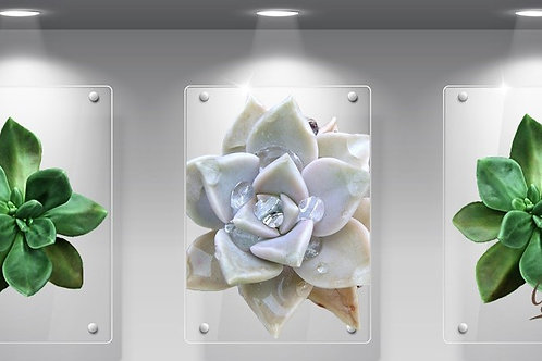 Perspex Succulent green and white Set of 3