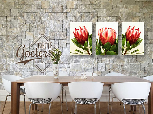 Protea Red set of 3