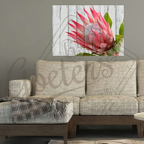 Buy one get one free: Protea single side - bright pink