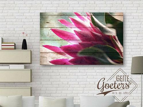 Protea Bright Pink