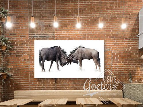 Oryx/ Blue Wildebeest horns