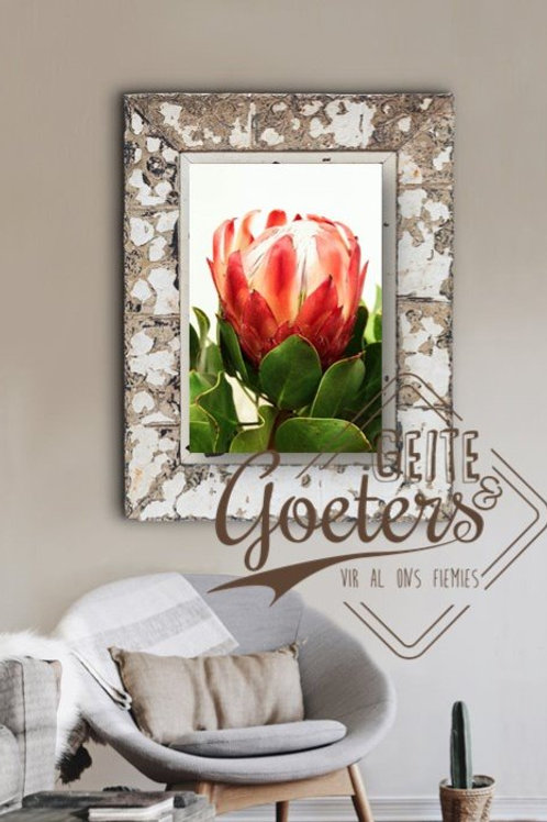FRAMED: Protea Red Straight