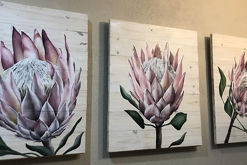 Set of 3 Proteas - different options