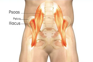 Hip Flexors: psoas and iliacus