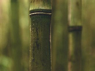 Bottombamboo.jpg