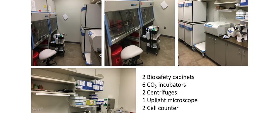 Our new cell culture room!