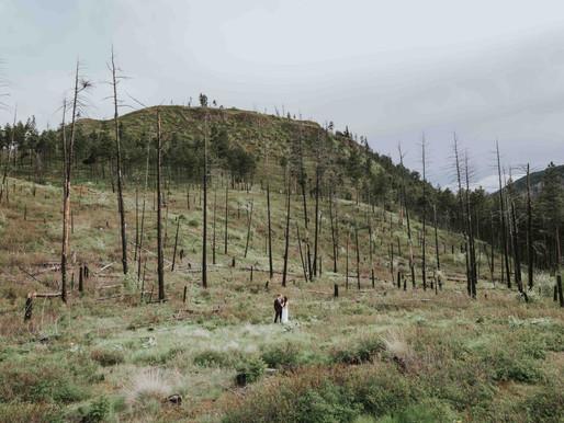 Rose Valley Forrest Elopement