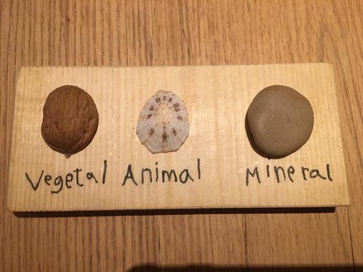 Vegetal - Animal - Mineral (Lucca Ulitzka 9 anys)