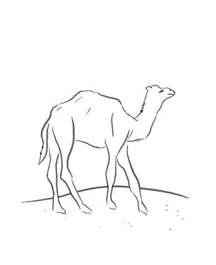 LESS_06_camel.tif