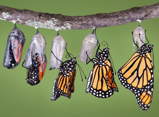 Enter Your Cocoon, Emerge As A Butterfly!