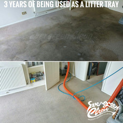 Carpet cleaning norwich
