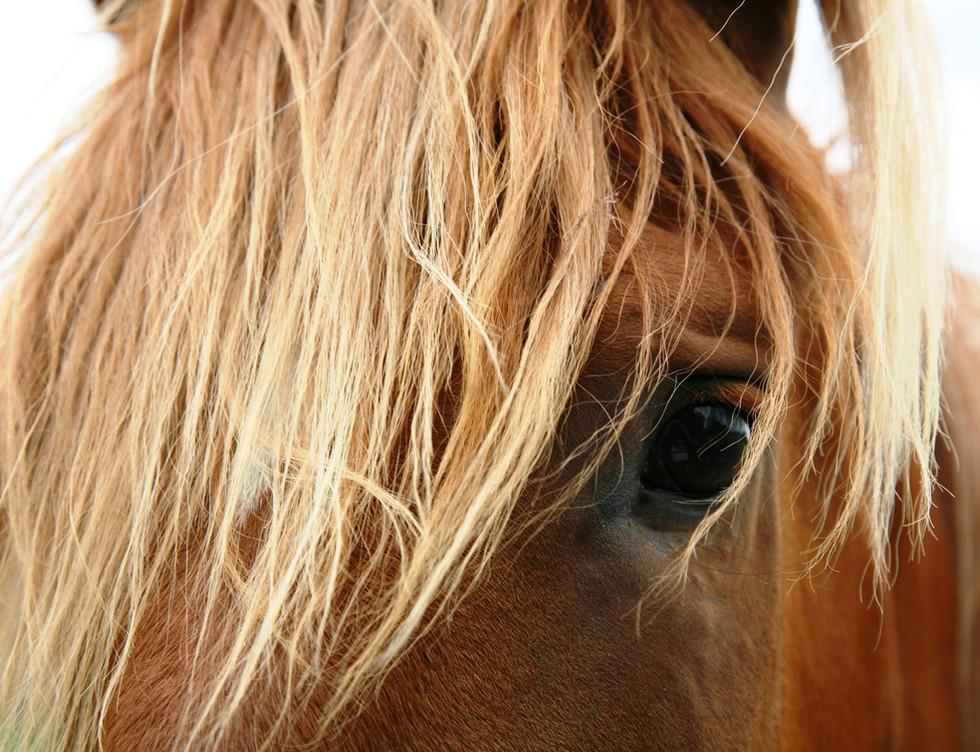 animal-breed-close-up-58897.jpg