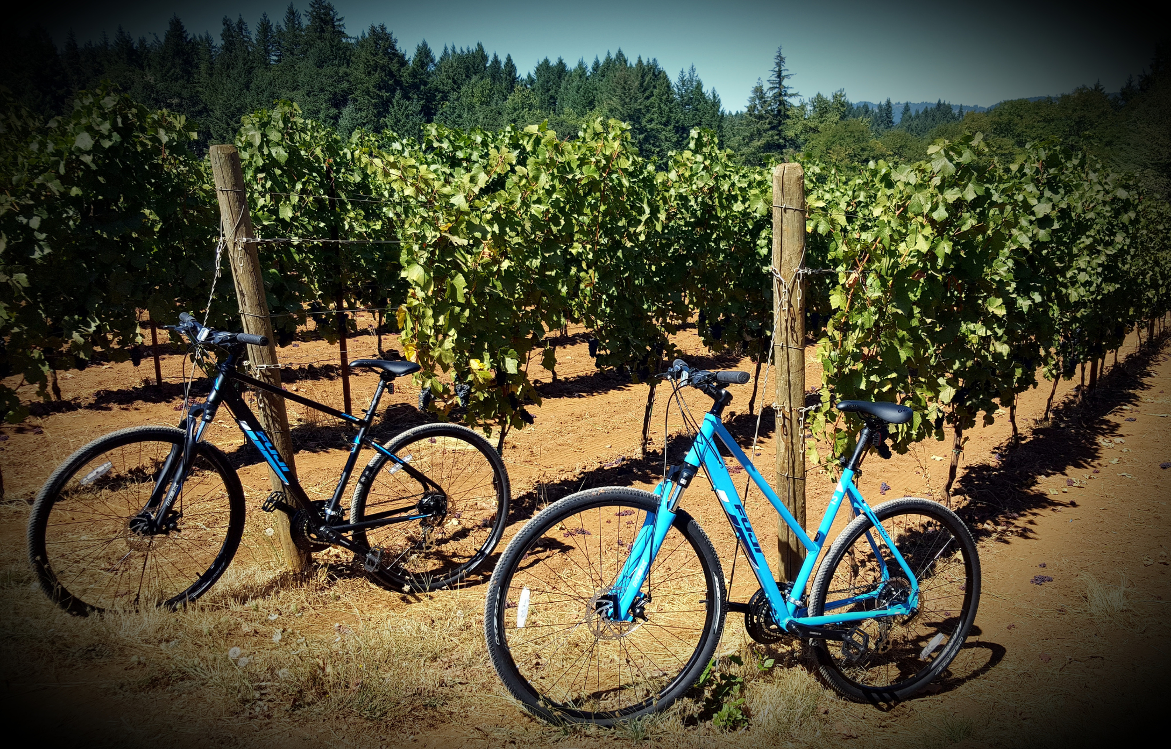 Chehelam Valley Winery Cycling Tour