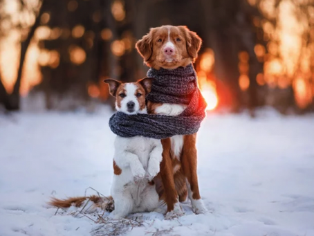 5 ways to keep your dogs healthy in the colder months.