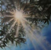 "fir tree 36"" x36"".jpg"