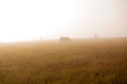 Misty mornings in Alberta