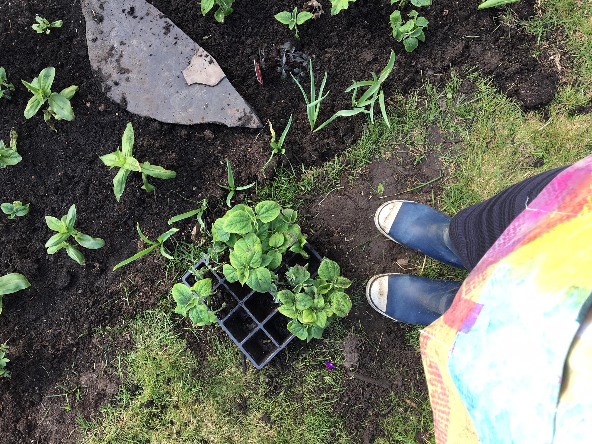 Transplanting season in spring