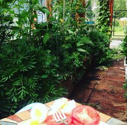 Farm Green house