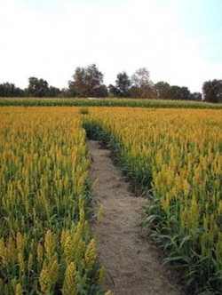 maze path