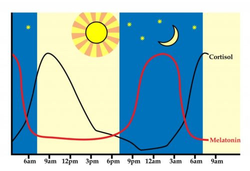 circadian rhythm or cortisol and melatonin