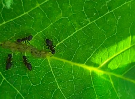 (video) Our Circular Ecology