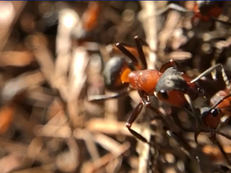 Empire of Ants (video) #LetItThrive