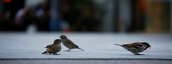 Fotoshooting Schweiz - Birol Isik- L