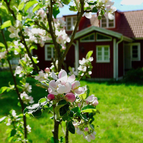 Experience Swedish Croft Life