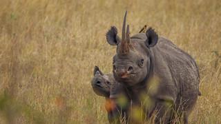 W Blk Rhino.jpg