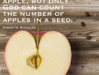 How Many Seeds in an Apple?