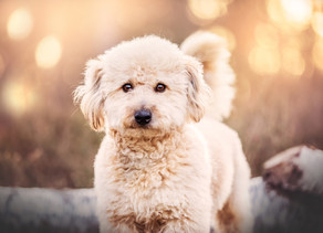 The Importance of Pet Photography.