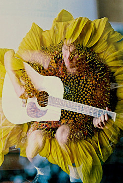 2 shiva sunflower 1