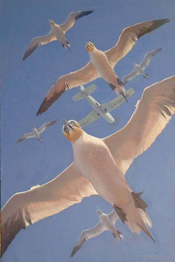 Gannets, Charles Thompson