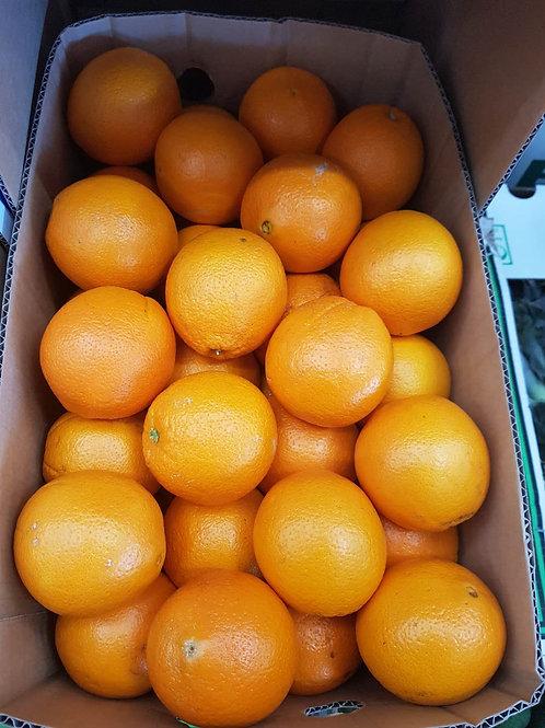Queenaland Premium Murcott Mandarin 15 kgs