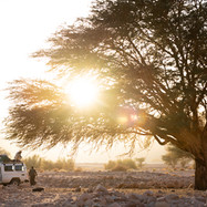 Our ride and an acacia tree