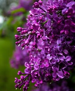 Spring -0126.jpg