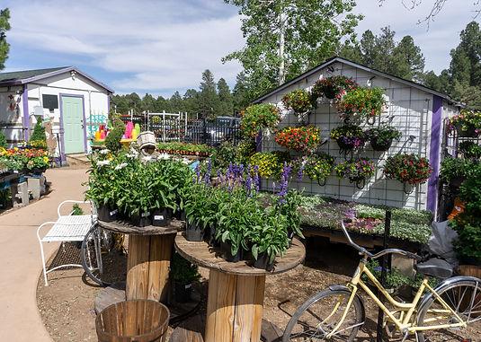 Viola's Flower Garden7.jpg