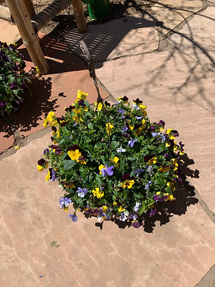Hanging Basket- Violas Yellow, Purple, light Purple