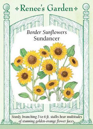 Sunflower Sundancer Seeds