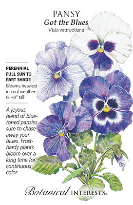Pansy Got the Blues Seeds