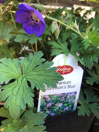 Geranium 1gal Johnson's Blue