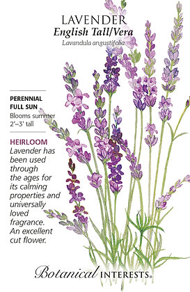 Lavender Tall English Vera Seeds