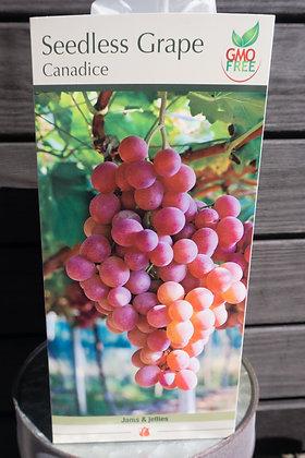 Seedless Grape Canadice Bareroot
