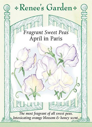 Sweet Pea April in Paris Seeds