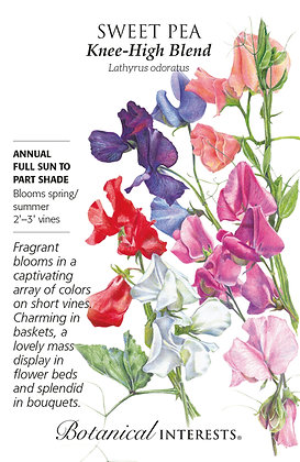 Sweet Pea Knee-Hi Blend Seeds