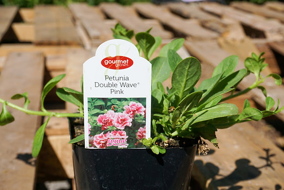 "Petunia Double Wave 4""pot Pink"