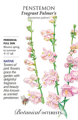 Penstemon Fragrant Palmers Seeds