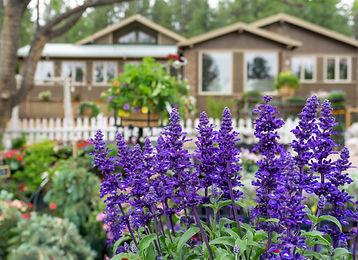 Salvia Garden.jpg